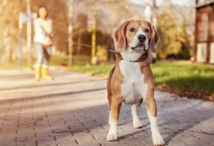 dog-walking-service at mova hair salons, staines and virginia water, surrey
